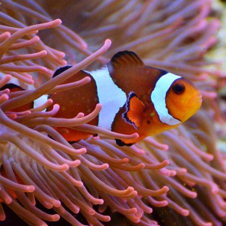Aquarium van Parijs