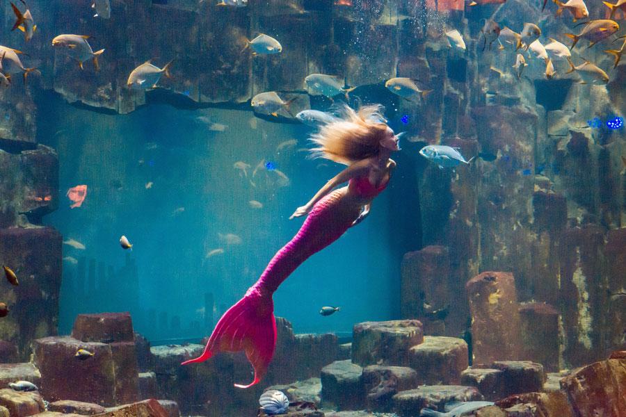 Aquarium Parijs